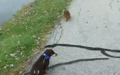Walking doxies
