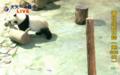 yiya playing donkey
