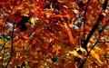 Leaf Vacuum Hose, Lawn Vacuum Hose, and Mulch Hose | Call 800-225-9513 | Ken Jones, Inc.