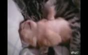 Cat Hugs Baby Kitten Having Nightmare